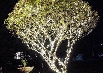 The most beautiful branch wrapped tree in the history of Christmas light installation