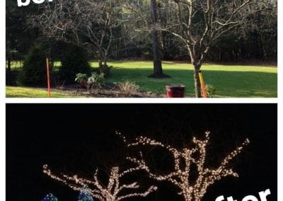 picture before and after of trees branched wrapped with lights for the holidays